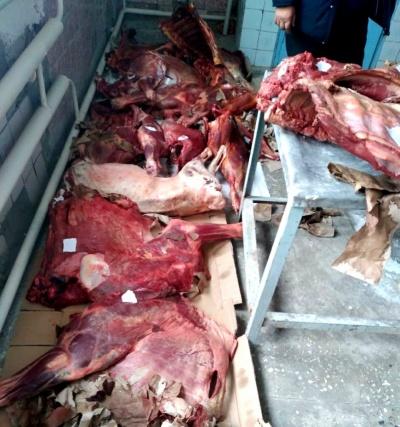 Тошкент шаҳрига олиб кетилаётган 351 кг сифатсиз гўшт маҳсулотлари тўхтатиб қолинди